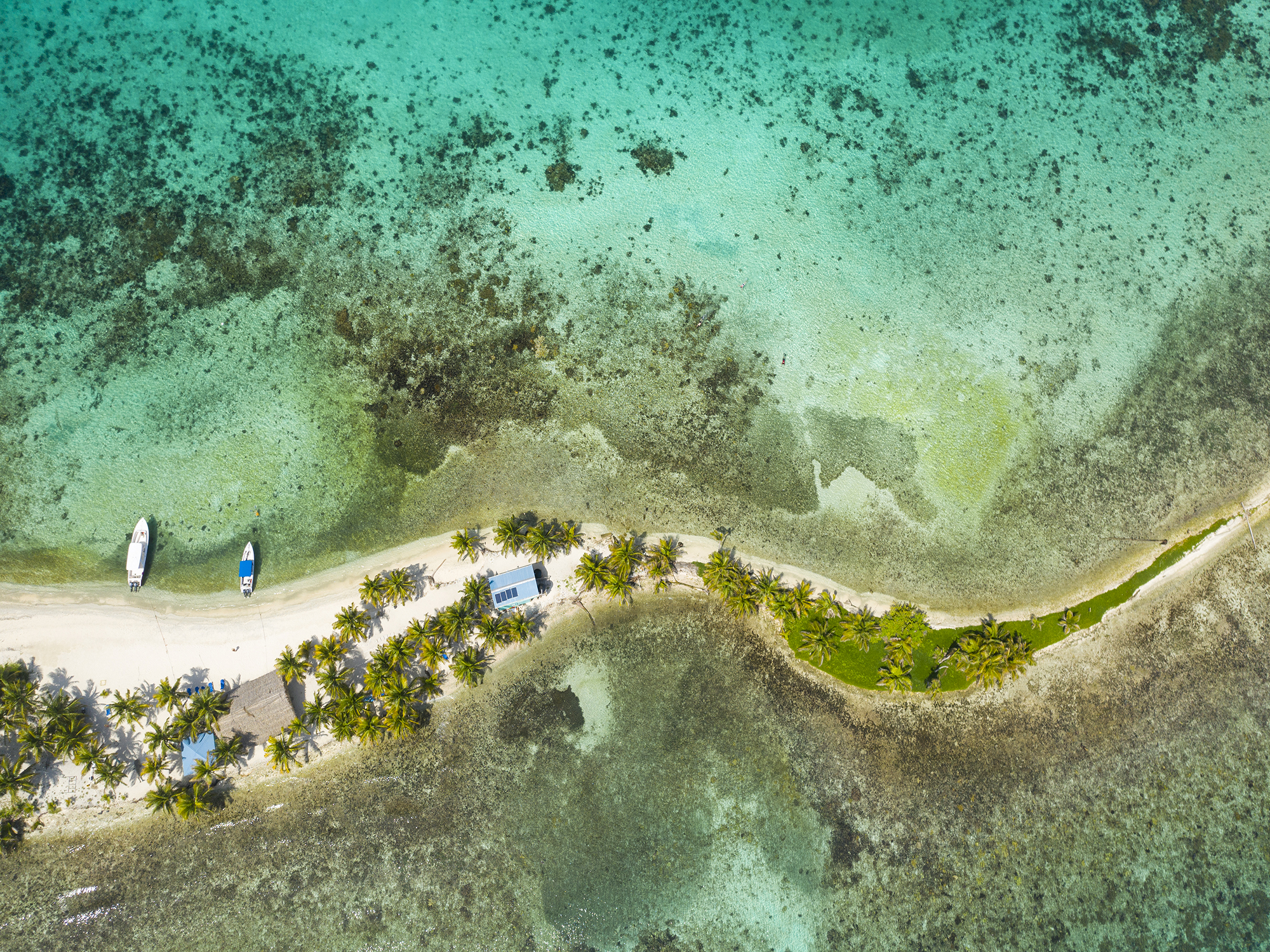 Top Places in Belize to Experience Marine Life  4