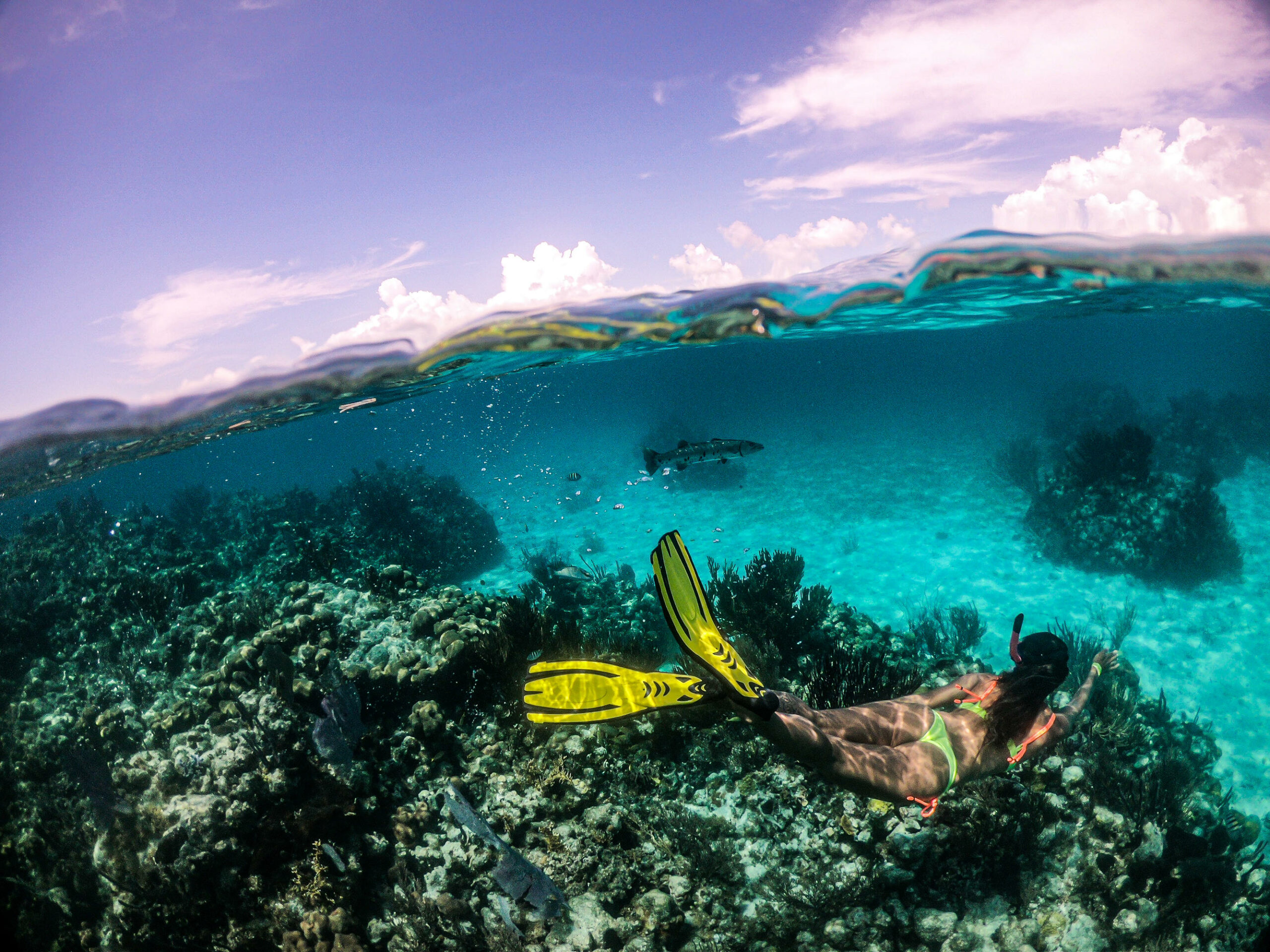 Top Places in Belize to Experience Marine Life  6