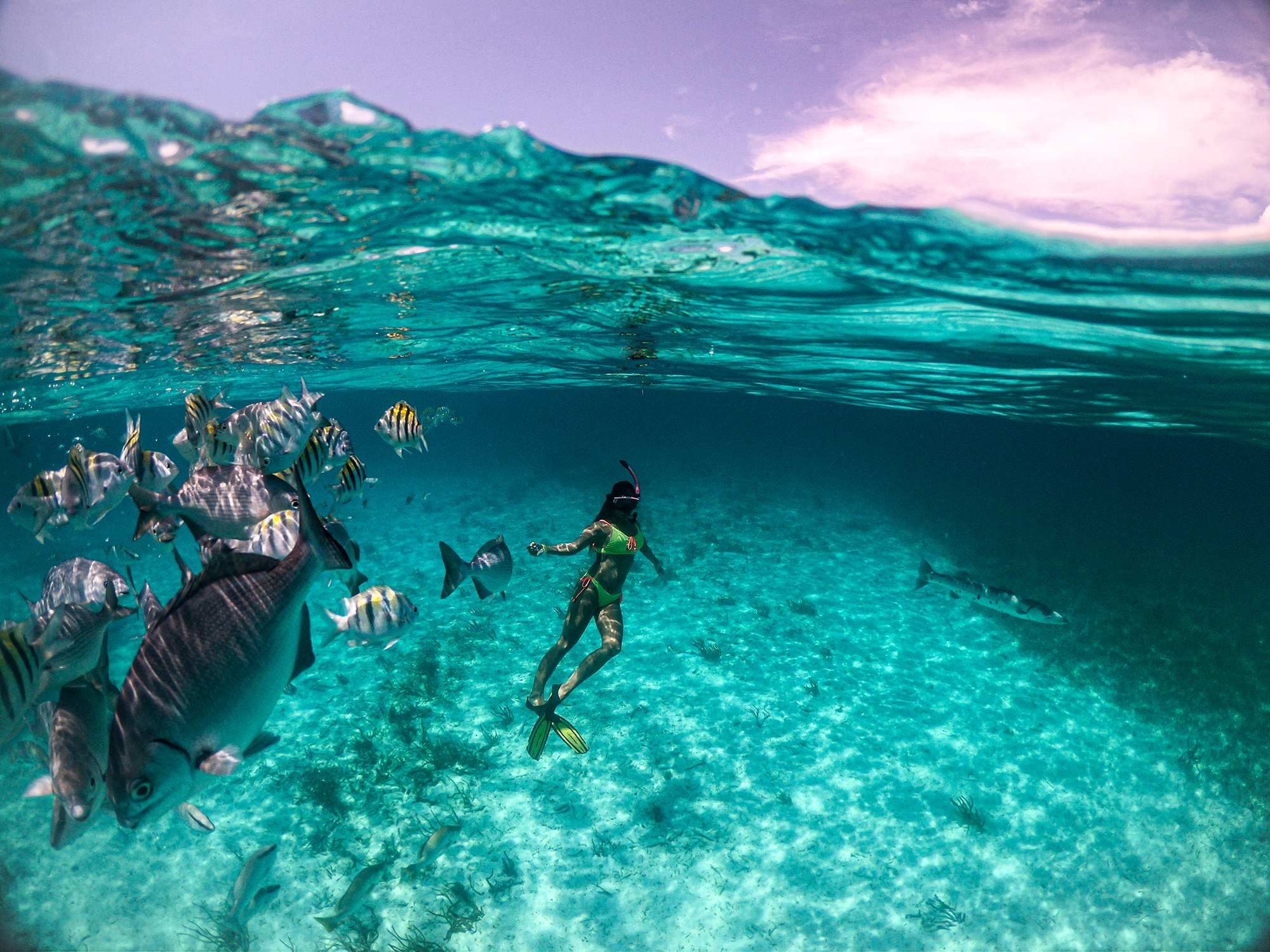 Top Places in Belize to Experience Marine Life  5