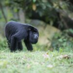 9 Places in Belize for Animal Lovers